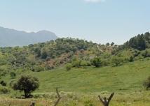 en route to Gaucín - photo: Liz Glazer
