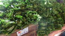 Gargantuan lettuces